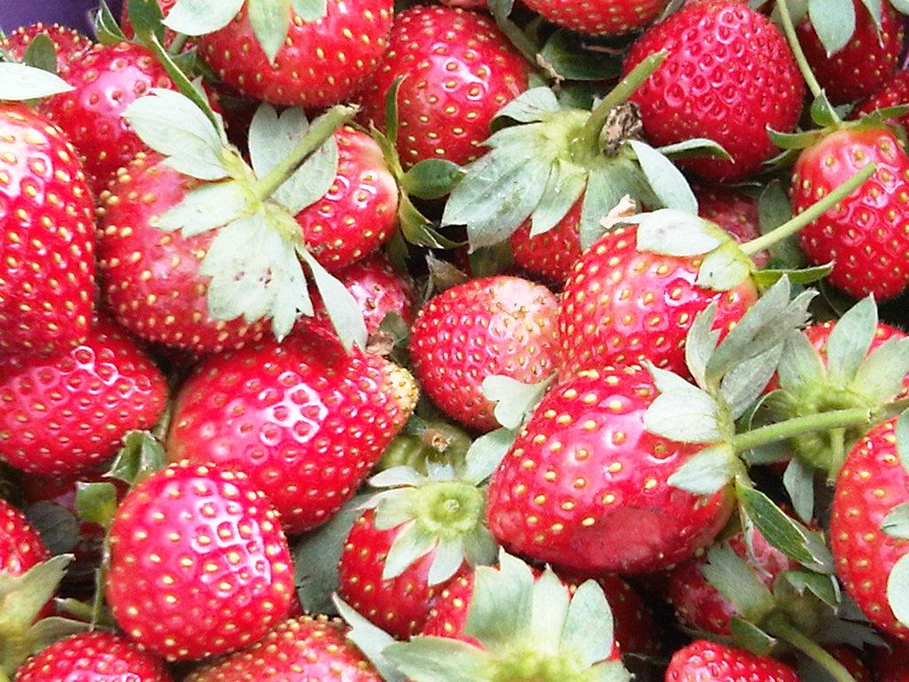 kebun strawberry lembang